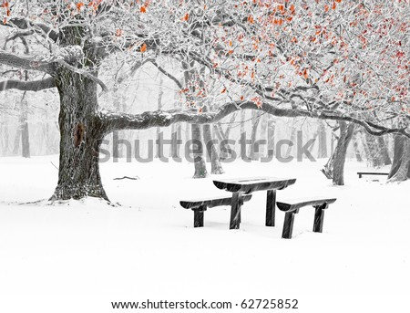 Park in winter with snow - stock photo