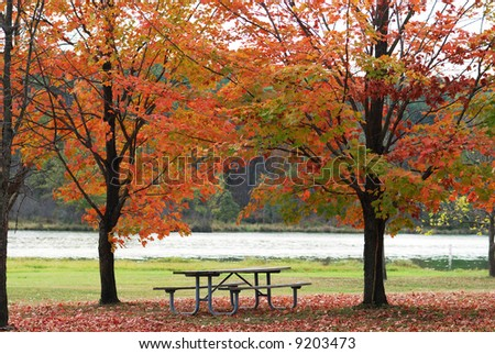 Park picnic table situated between two colorful trees overlooking a body of water.