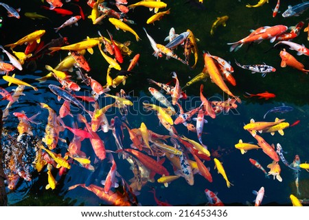 Stock images royalty free images vectors shutterstock for Koi spawning pool