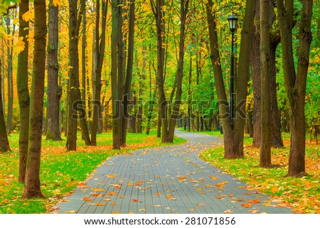 park with deciduous trees removed in the fall in October - stock photo