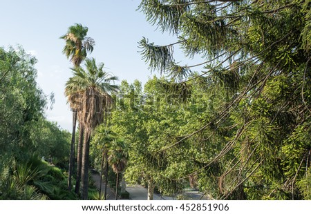Park with palms and trees