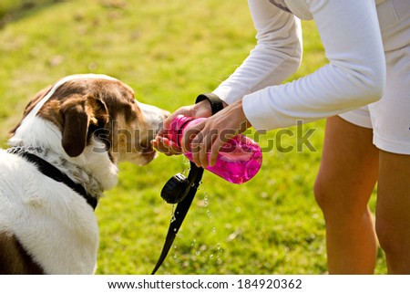 Park: Woman Gives Dog Drink From Water Bottle - stock photo