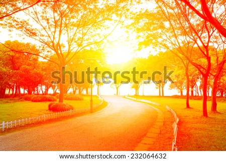 Park woods curve road in the sunset - stock photo