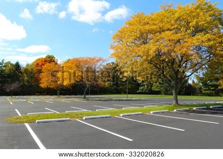 parking lot tree - stock photo