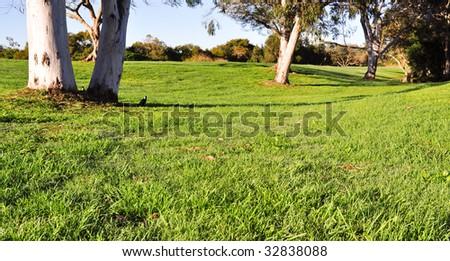 Parkland - stock photo