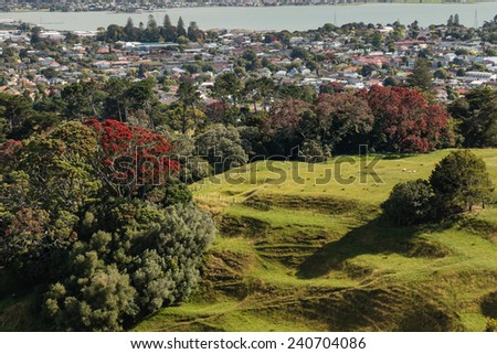 parkland above Auckland suburb in New Zealand - stock photo