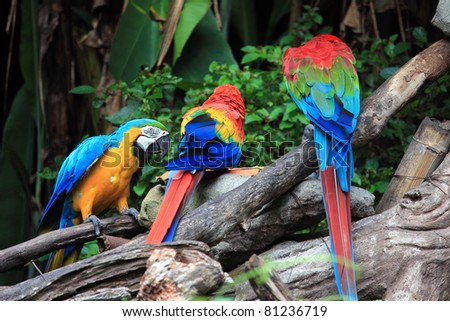 Parrot Action - stock photo