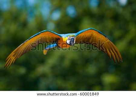 Parrot airborne - stock photo