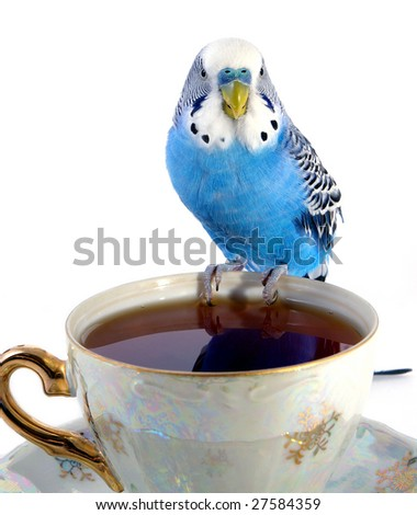 Parrot and cup with tea - stock photo