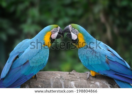 Parrot bird (Severe Macaw) sitting on the branch - stock photo