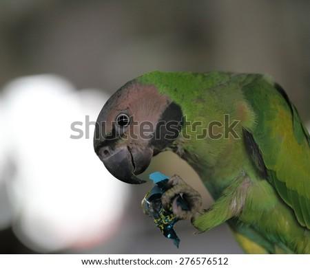 parrot head - stock photo