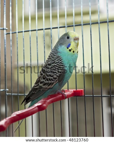 parrot in a cage - stock photo