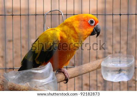 Parrot in a cage. - stock photo