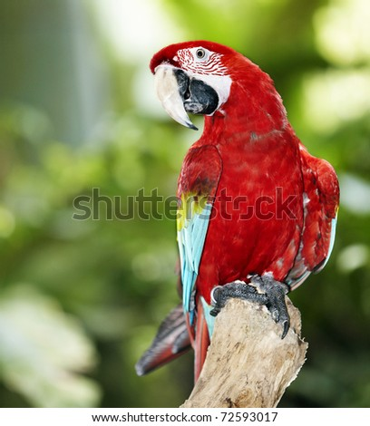 Parrot in green rainforest. Outdoor. - stock photo