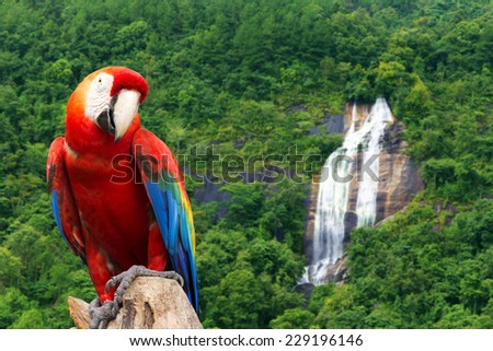 Parrot in the rainforest with a waterfall. - stock photo