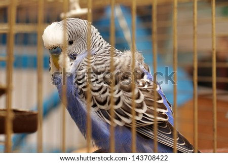 parrot is in a cage - stock photo