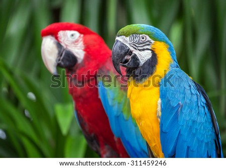 parrot macaw