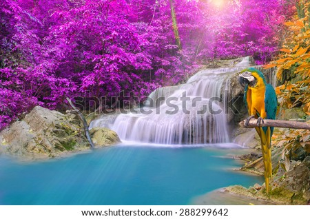 Parrot macaw against tropical Waterfall in Deep forest. - stock photo