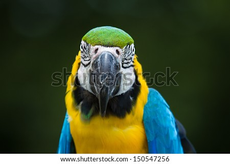 Parrot Macaw closeup - stock photo