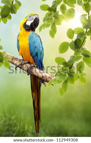 Parrot Macaw in the wild. The background bokeh