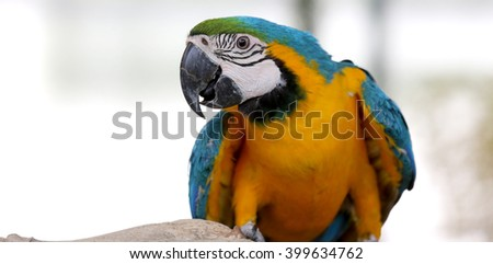 Parrot , Macaw on branch