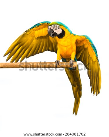 parrot macaw on white background - stock photo