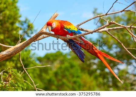 Parrot, Macaw, Panama, Central America
