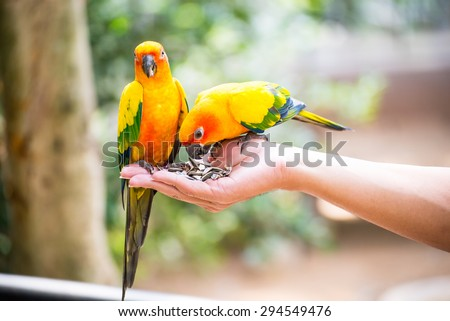 parrot on hand - stock photo