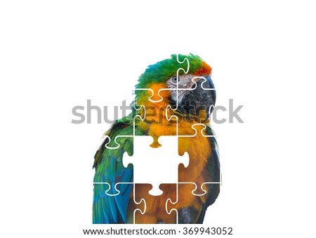 Parrot puzzle on white background. - stock photo