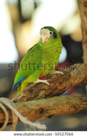 Parrot sitting in a tree in tropical jungle - stock photo