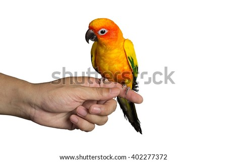Parrot (sun conure) sitting on a hand isolated on white background - stock photo