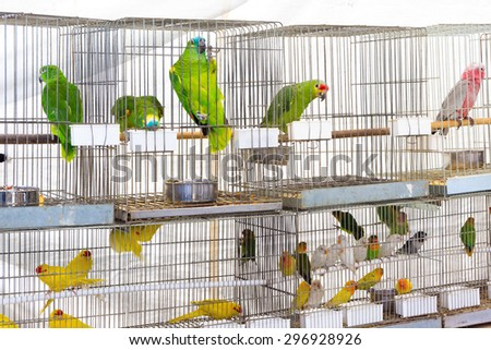 Parrots for sale at pet shop - stock photo
