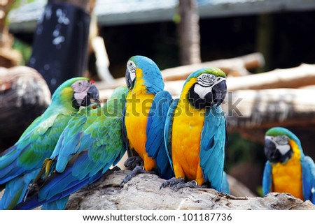parrots stand together, snapped in Bangkok, Thailand - stock photo