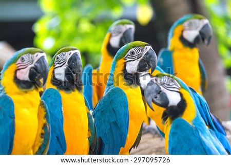 Parrots standing on a tree in the forest. - stock photo