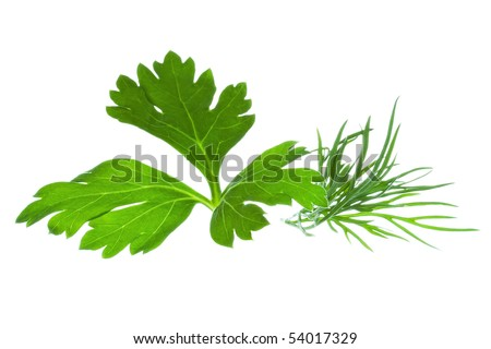 Parsley and Dill on white background - stock photo
