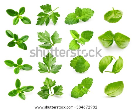 Parsley herb, basil leaves, thyme,mint spice isolated on white background. - stock photo