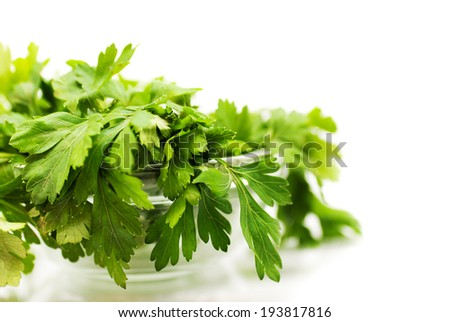 Parsley in bowl over white