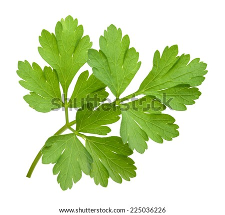 parsley isolated cutout