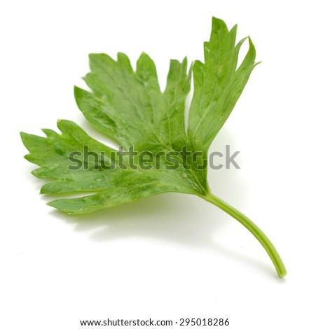 parsley isolated on white - stock photo