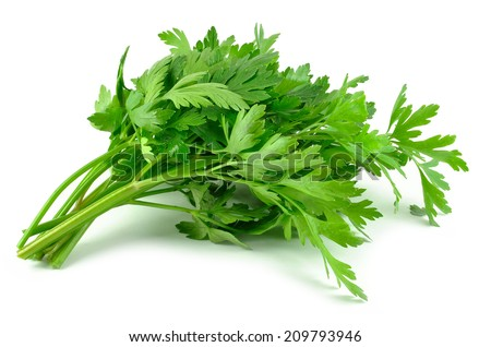 parsley leaves  - stock photo