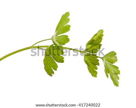parsley leaves isolated on white background