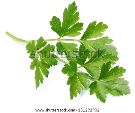Parsley on a white background. - stock photo