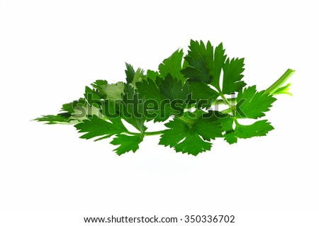 parsley sprigs isolated on white - stock photo