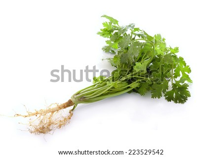 Parsley tree and Parsley root on white background