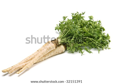 Parsley vegetable with root detail on white