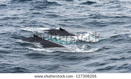 Part of a whale out of the water - stock photo