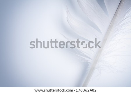 part of blue feather on a white paper - stock photo