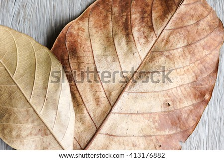 Part of dry leaves for background - stock photo