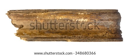 Part of the bamboo isolated on white background.