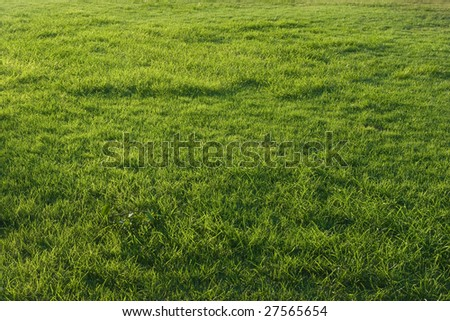 Part of unoccupied green grass field - stock photo